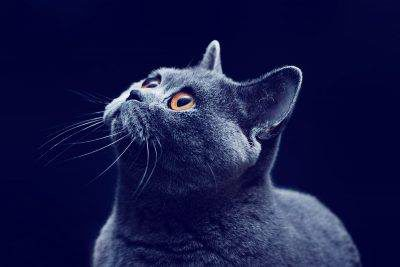 Can Cats Really see in the Dark? You're About to Find out