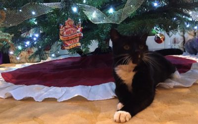 Cats and Christmas Trees – Is it the smell of pine or the dangly bits they love?