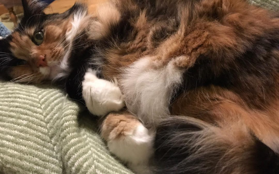 Do cats dream and if so are they counting mice?