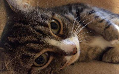 Feline Groovy – busy times at HomeFurYou